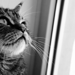 100 Words or Less: On the Plotting of Cats