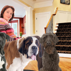 Empty Nest Mom Now Dog Pack Leader