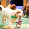 I Got Smoked in the Puppy Bowl XI Fantasy Game