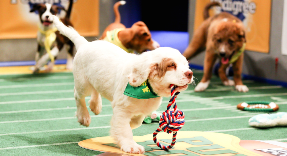 Puppy Bowl Action