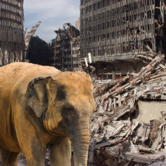 Tortured Elephant Will Never Forget 9/11