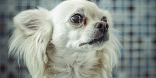 8 Pictures of Dogs Whose Spirits Were Broken After Seeing Their Owners Have Sex