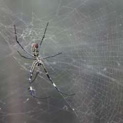 Local Spider Just Wants to Hang