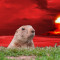 Punxsutawney Phil Forecasts Nuclear Winter