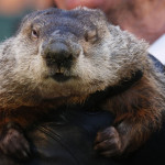 Punxsutawney Phil Just Using Weather.com