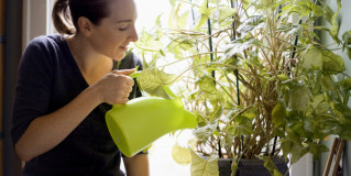 Busy Working Professional Ready to Try Owning Houseplant Again