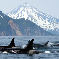 Killer Whales Still Stoked on Tight Name