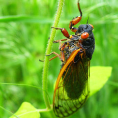 Cicada Teen Ready to Escape Home of Tragically Unhip Family