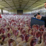 In Unprecedented Move, President Obama Pardons All the Turkeys