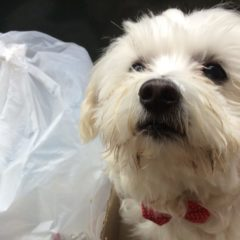 Amazing: Nobody Noticed This Neglected Street Dog Until One Passionate Woman Gave It a Bowtie