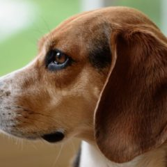 Pet Insurance Rejection Letters to Animals With Pre-Existing Conditions