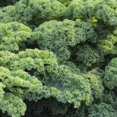 Places to Hide the Kale So That Your Wife Will Think You Ate It