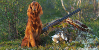 GOP Not Entirely Opposed to Arming Dogs