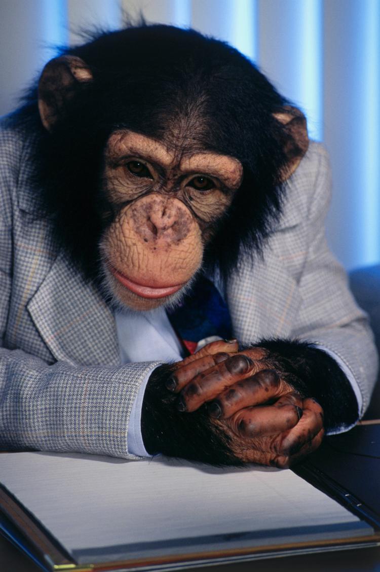 определить прикольная картинка обезьяна в офисе рекомендуем прочесть